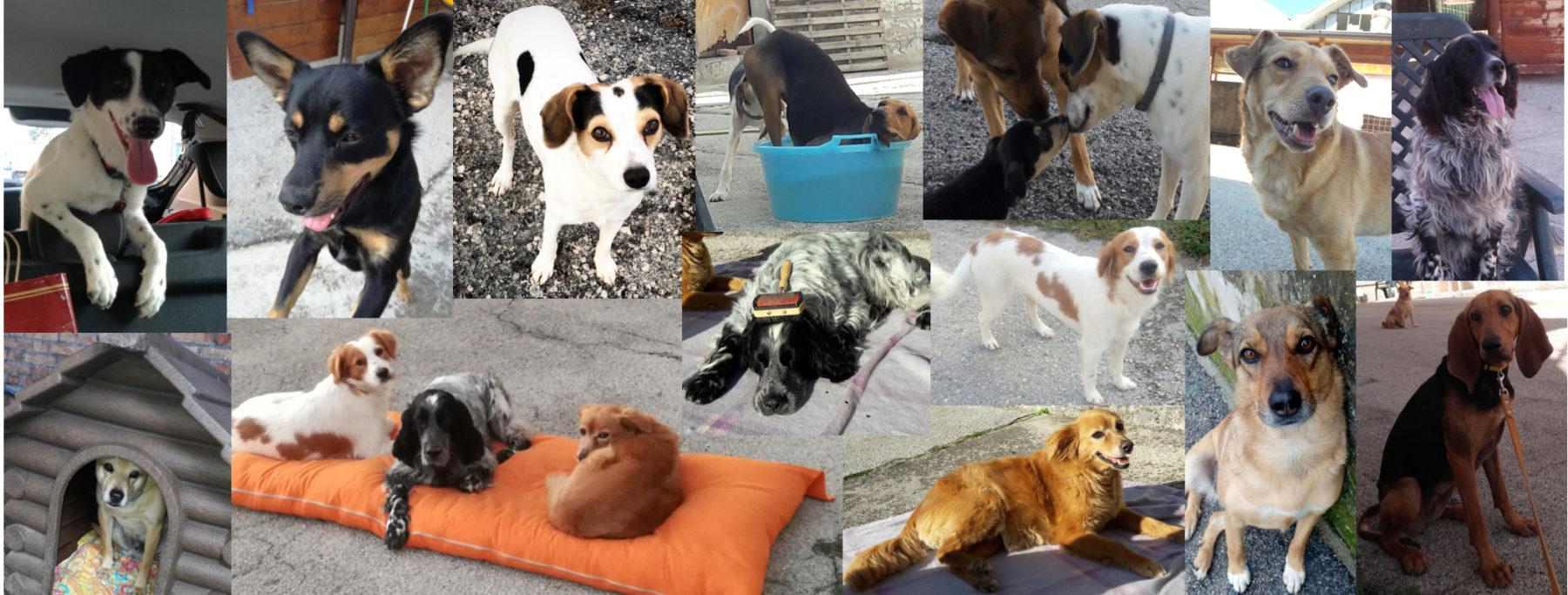 Rifugio dei cuccioli